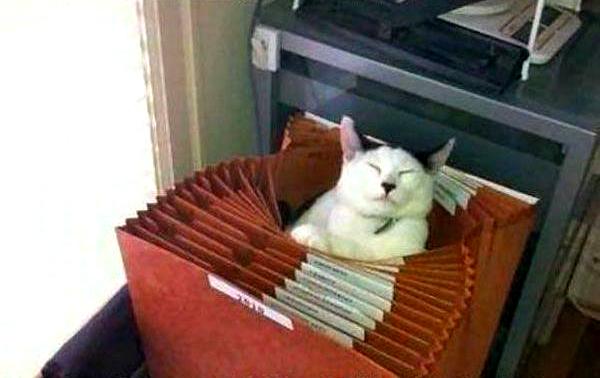 cat-accordian-file