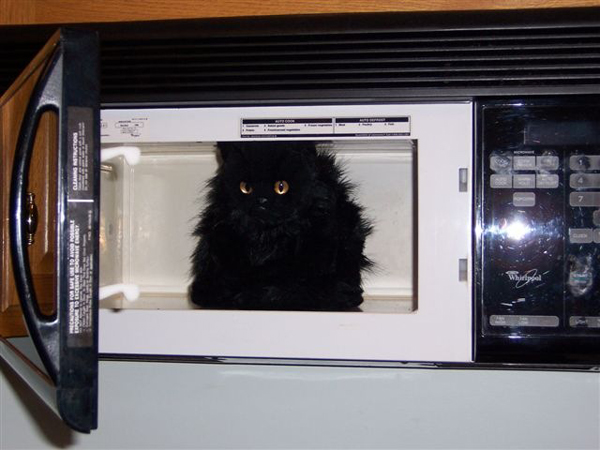 cat-appliance