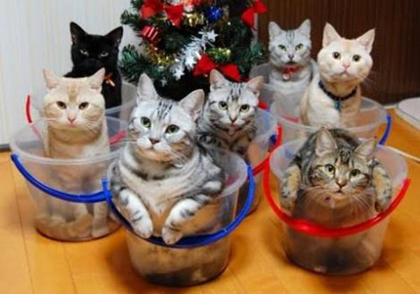 cat-bucket