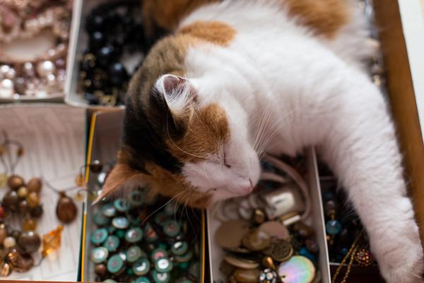 cat-button-organizer