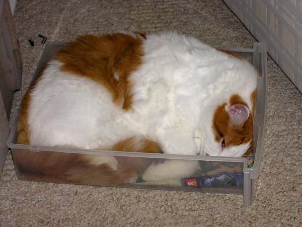 cat-container2