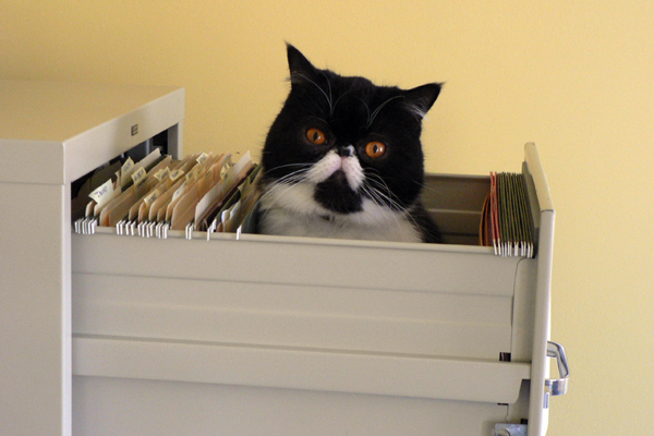 cat-drawer
