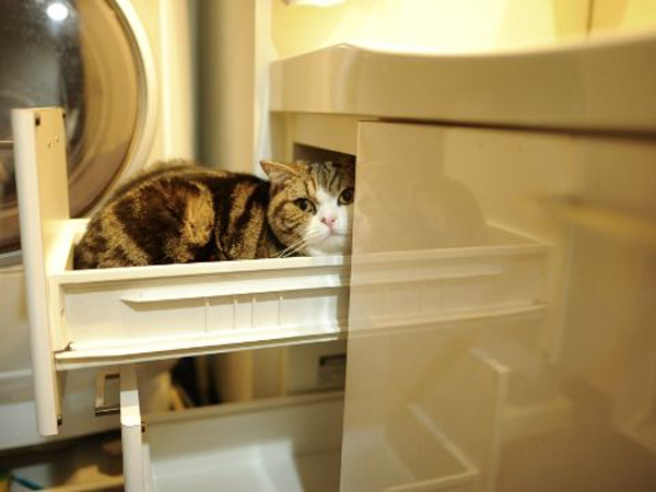 cat-drawer2