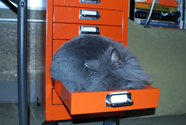 cat-drawer3