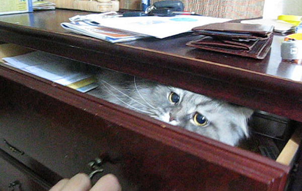 cat-drawer7