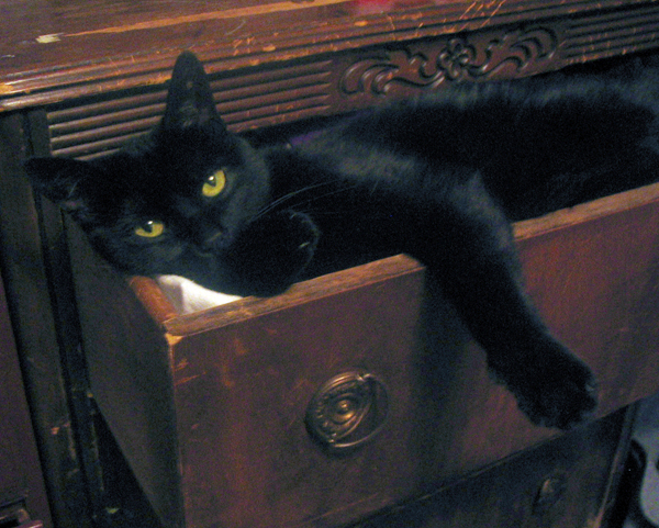 cat-dresser3