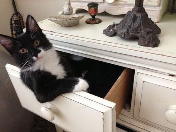 cat-dresser6