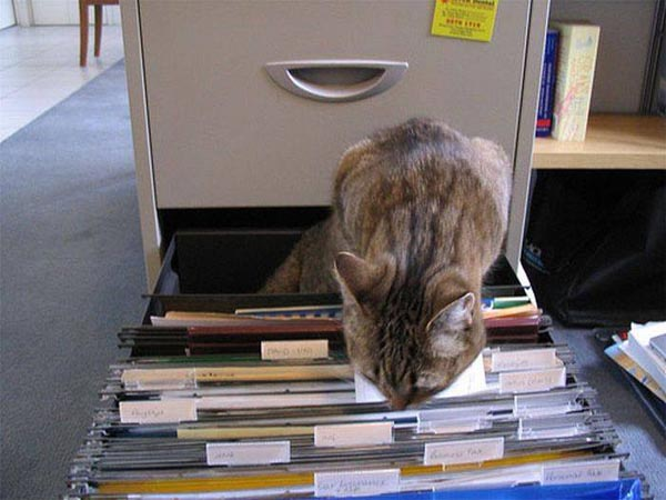 cat-filing