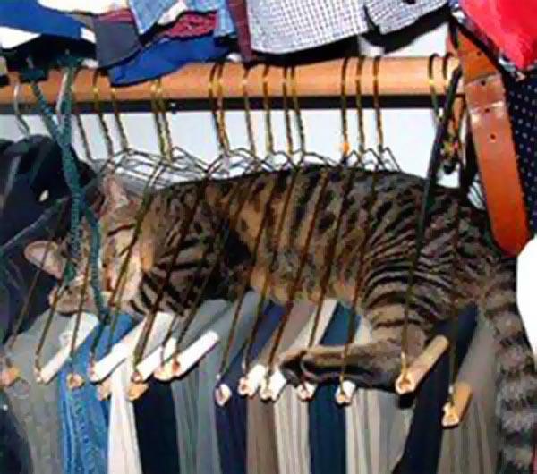 cat-hanger