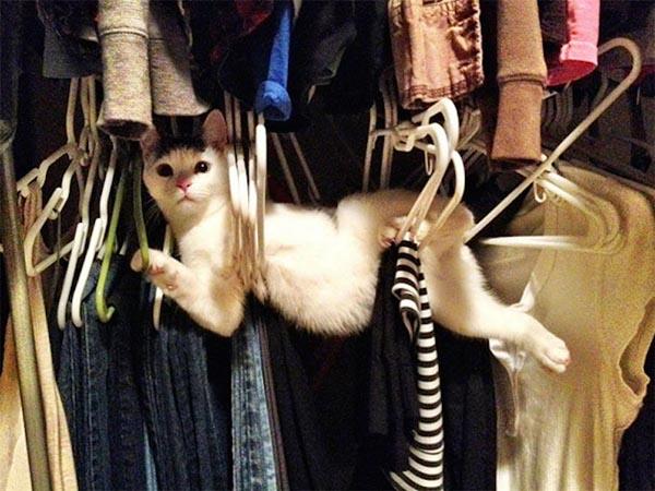 cat-hanger2