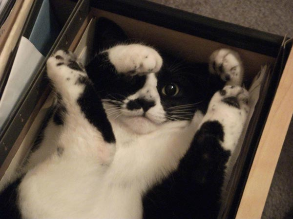 cat-hanging-folder