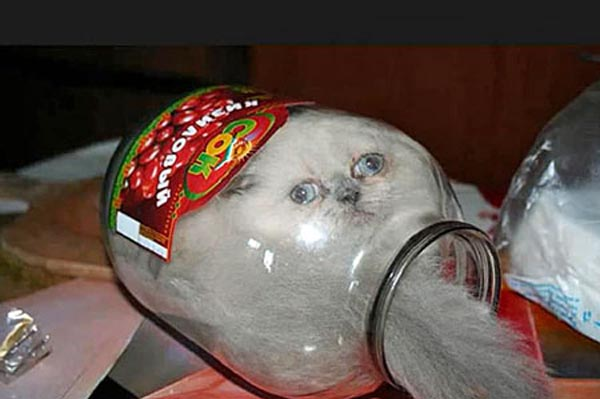 cat-jar