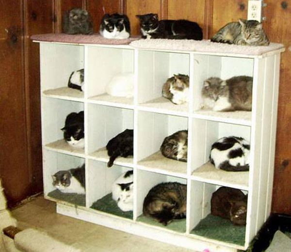 cat-organization-shelf