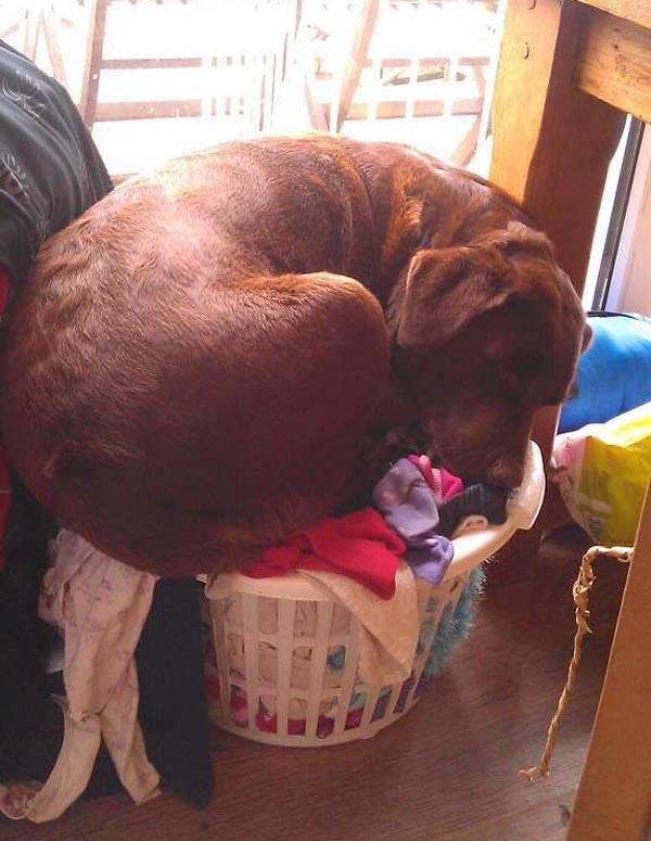 dog-basket