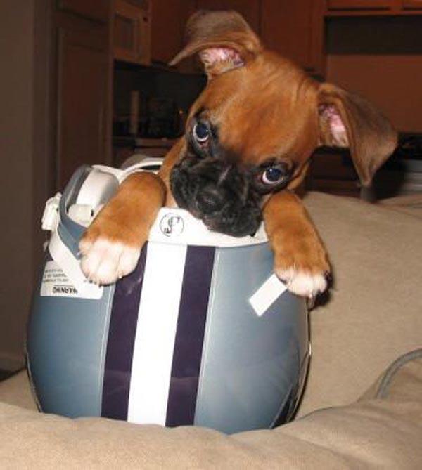 dog-bucket