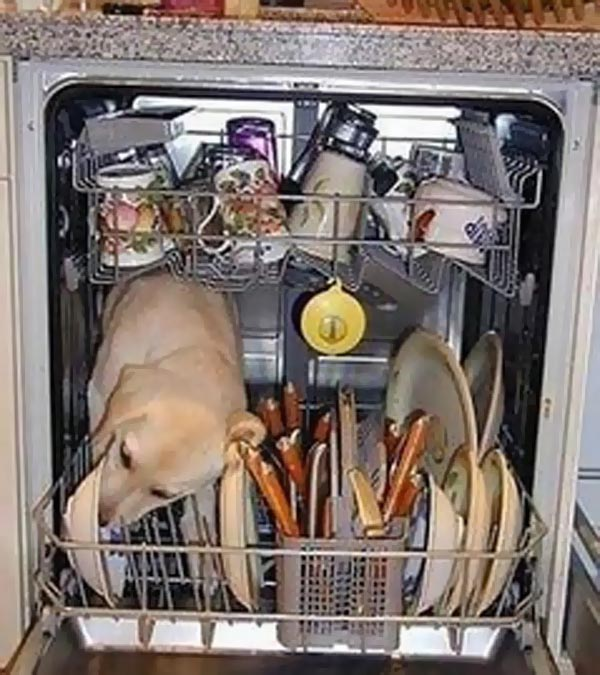 dog-dishwasher