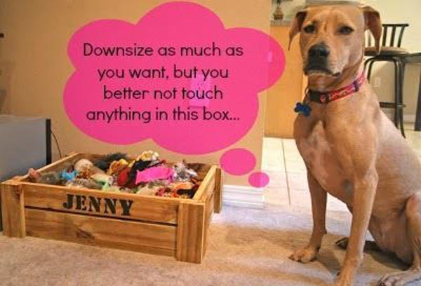 dog-downsizing