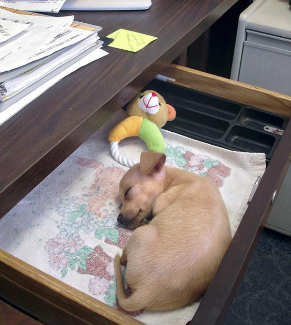 dog-drawer