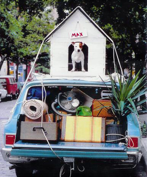 dog-mover