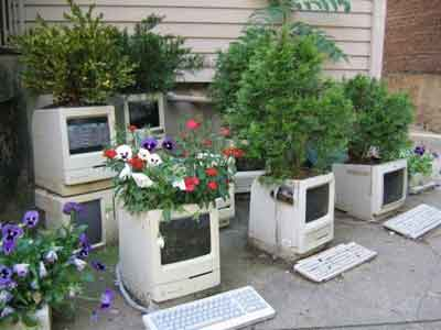 old-mac-planters