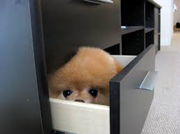 puppy-file